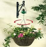 plantas para engordar y ganar peso